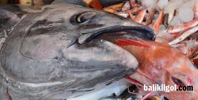 Şanlıurfa'da balıkçıların yüzü gülüyor
