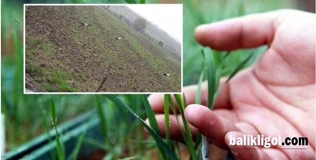 Yağmur, çiftçileri sevindirdi