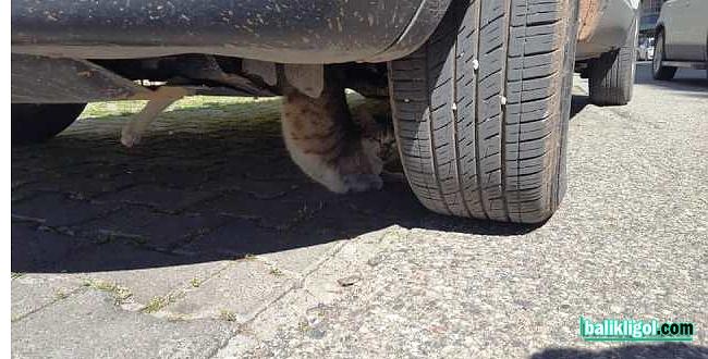 Otomobile sıkışan kedi kurtarıldı