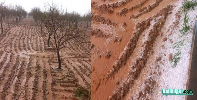 Şanlıurfa fıstık bahçelerini dolu vurdu