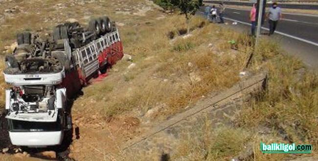 Şanlıurfa'da arpa yüklü araç devrildi