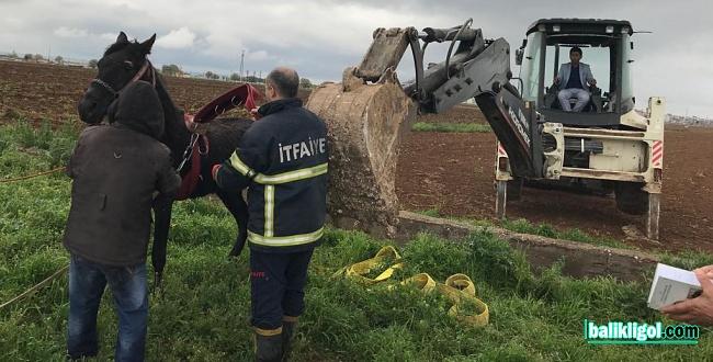 Suruç'ta sulama kanalına düşen atı itfaiye kurtardı