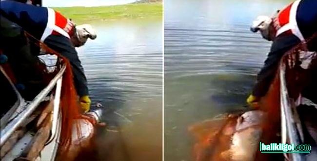 Bozova'da kaçak balık avcılarına operasyon