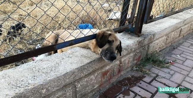 Ölmek üzere olan köpeği itfaiye kurtardı