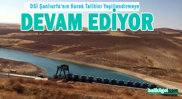 Şanlıurfa'da Harran Suruç Ovası sulaması devam ediyor