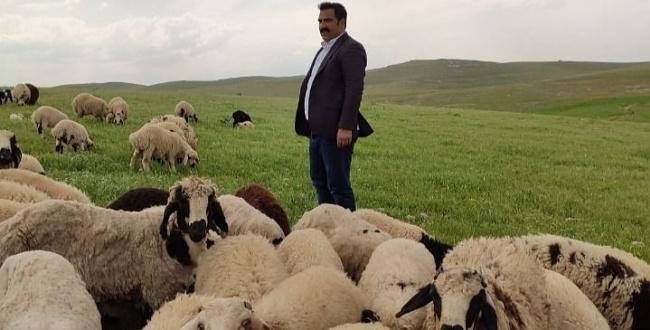 Canlı Hayvan Borsası Başkanı Çiftçi: Hayvancılık Urfa'da alarm veriyor
