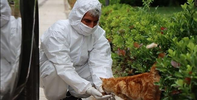 Şanlıurfa'da sokak hayvanları besleniyor