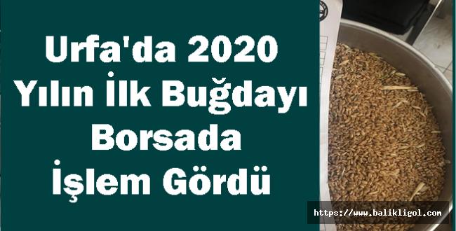 Urfa'da 2020 Yılın İlk Buğdayı Borsada İşlem Gördü