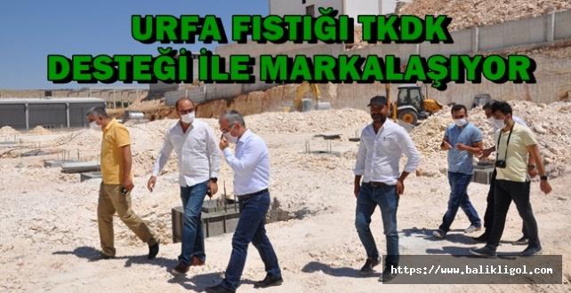 TKDK Urfa Fıstığının Markalaşması Çalışmalarına Destek Veriyor