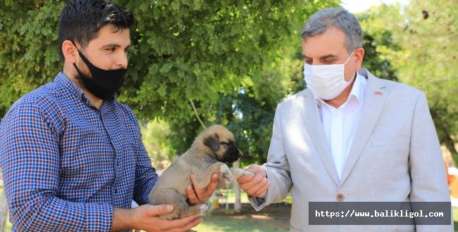Başkan Beyazgül, Hayvan Barınağını Ziyaret Etti