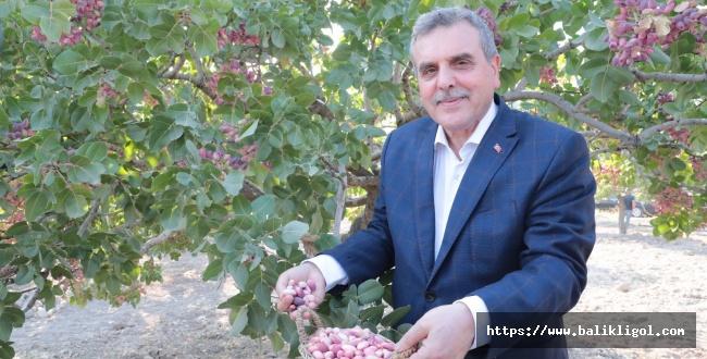 Büyükşehir Belediyesi Fıstık Dikme Kampanyası Başlattı