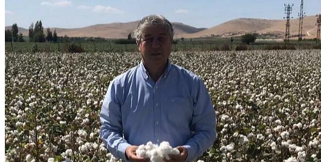 Urfa'da Pamuk Üretiminde Düşüş Oldu