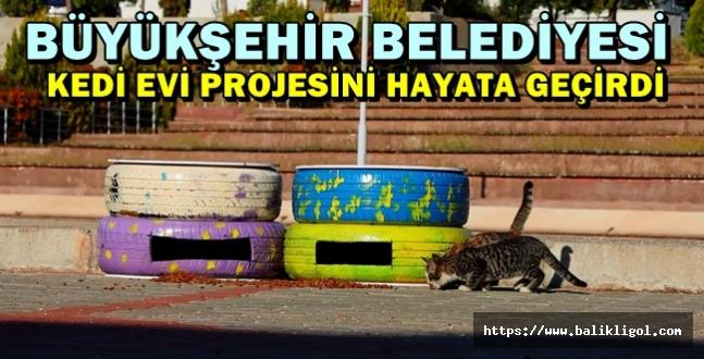 Urfa'daki Kedilerin de artık bir evi var