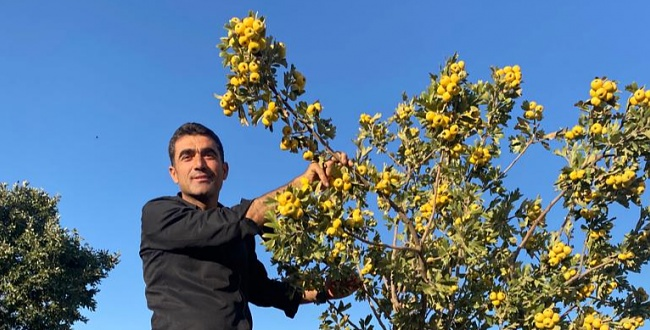 Adıyamanlılar Ekonomiye Kazandırdı, Sıra Urfa'da