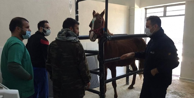 Harran Üniversitesi Hayvan Hastanesi Ruhsatını Aldı