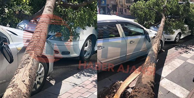 Urfa'da rüzgardan dolayı iki aracın üstüne ağaç devrildi