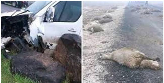 Otomobil sürüye daldı; 29 koyun telef oldu