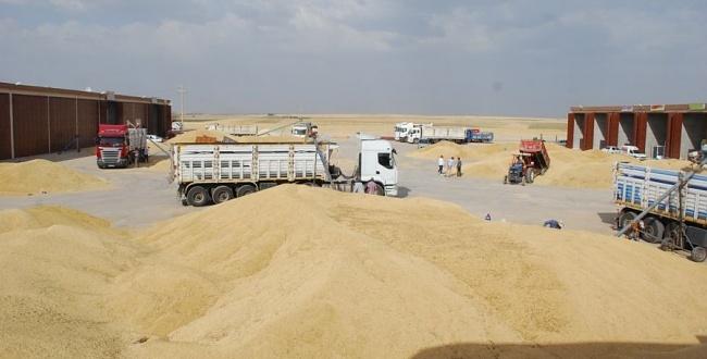 Buğday üretiminde Şanlıurfa birinci oldu