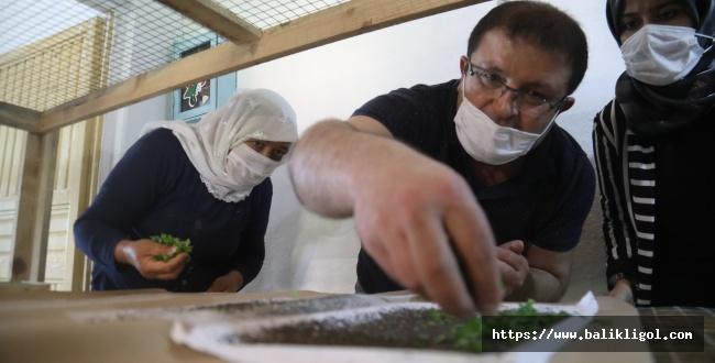 Şanlıurfa Büyükşehirden İpekböcekçiliği İçin Çiftçiye Tam Destek
