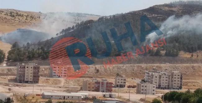 Orman fakiri Urfa'da var olanlarda yanıyor