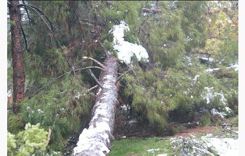 Urfa'da kar ağaçları devirdi