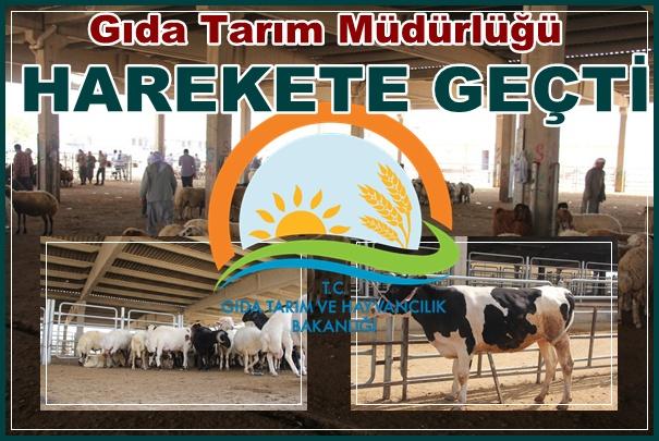 Urfa'da hayvan pazarı kapatıldı