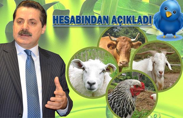 Hayvancılığa Büyük destek!