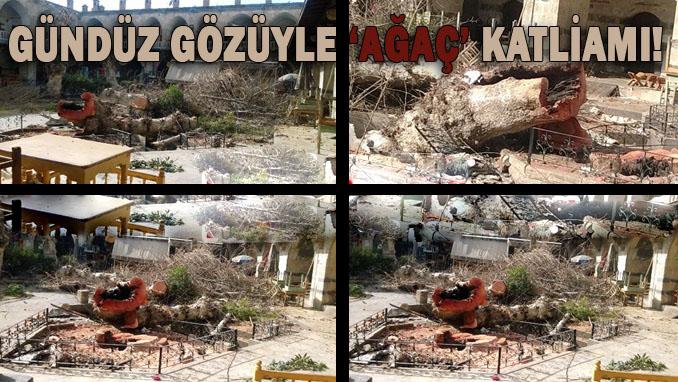 Urfa Gümrük Hanı'ndaki asırlık çınar ağaçları kesildi