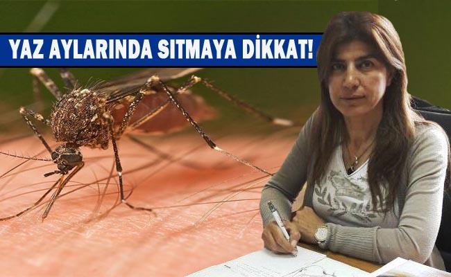 Yaz aylarında sıtmaya dikkat! sıtma nedir, nasıl korunur?