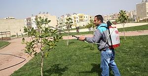 Urfa'da Bitki Zararlılarıyla Mücadele Çalışması