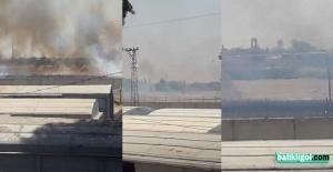 Akçakale sınırındaki mayınlı araziler yanıyor