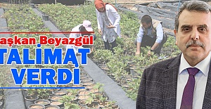 Şanlıurfa Büyükşehir Belediyesi Kendi Fidanını Üretiyor