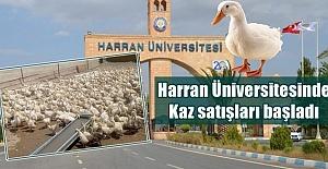 Harran Üniversitesi Kaz Satışına Başladı