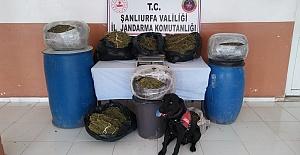 Suruç'ta Birçok Adrese Operasyon: 10 Kişiye Gözaltı