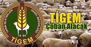 TİGEM Ceylanpınar Çiftliği İçin Çoban Alacak