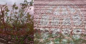 Bozova'da dolu yağışı: Ekinler ve ağaçlar zarar gördü
