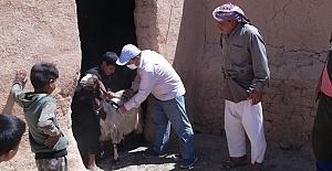 Türkiye'nin Desteğiyle Hayvanlarına Kavuştular