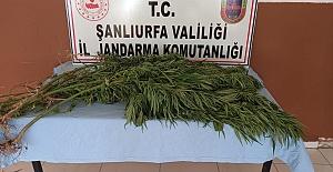Urfa'da uyuşturucu operasyonu: 5 Kişi Gözaltına alındı