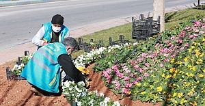 Eyyübiye'de Bahara Erken Açtı, İlçe Renk Renk Çiçeklerle süslendi