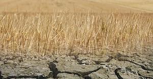 Şanlıurfa Başta olmak üzere bölgede Kuraklık verimi yarıya düşürdü