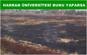 Harran Üniversitesinden bilim dışı uygulama VİDEO