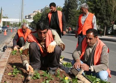 Şanlıurfa Belediyesi çiçek ekiyor