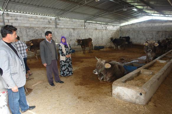 Viranşehir'de üç gün hastalığından hayvanlar telef oluyor