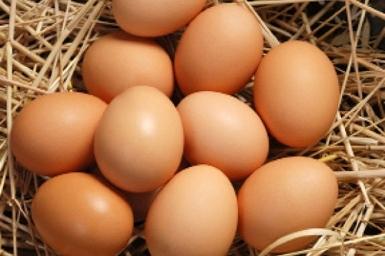 Yumurta üretimi azalıyor