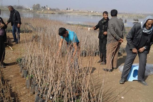 Urfalılar Fıstık ve zeytin fidanı ekimine başladılar