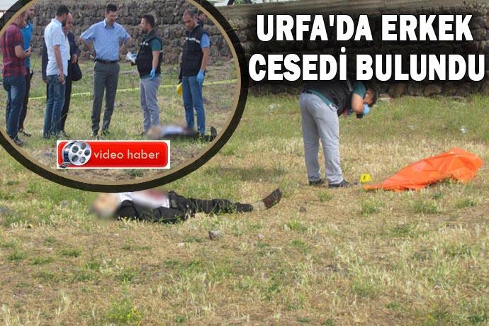 Korkunç İnfaz! Urfa'da erkek cesedi bulundu