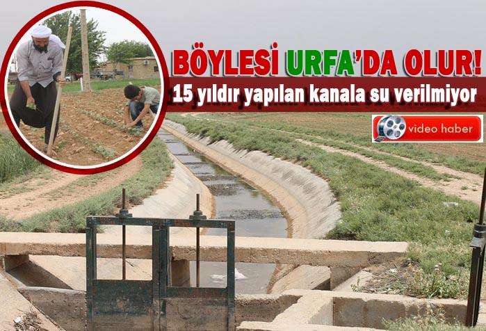 Su akar Urfalı bakar! tarlalarda ekinler kurumuş kimin umurunda?