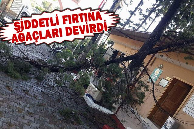 Allah beterinden korusun! Şiddetli fırtına ağaçları devirdi