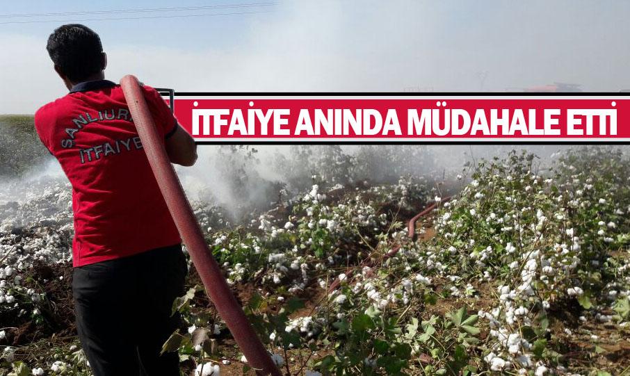 Urfa'da Pamuk tarlası alev alev yandı