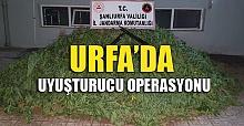 Urfa'da Uyuşturucu Operasyonu: 3 kişi gözaltına alındı